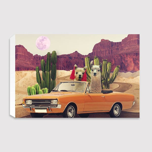 future-image-canvas-Llamas-on-the-road-again