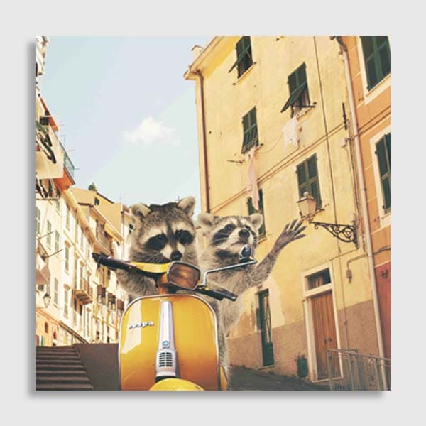 future-image-no-matte-no-frame-Raccoons-in-Italy-revisi