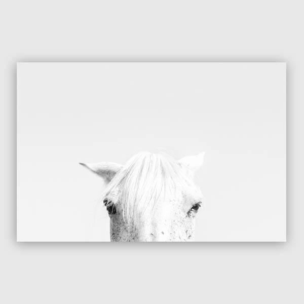 600x600-White-horse-landscape